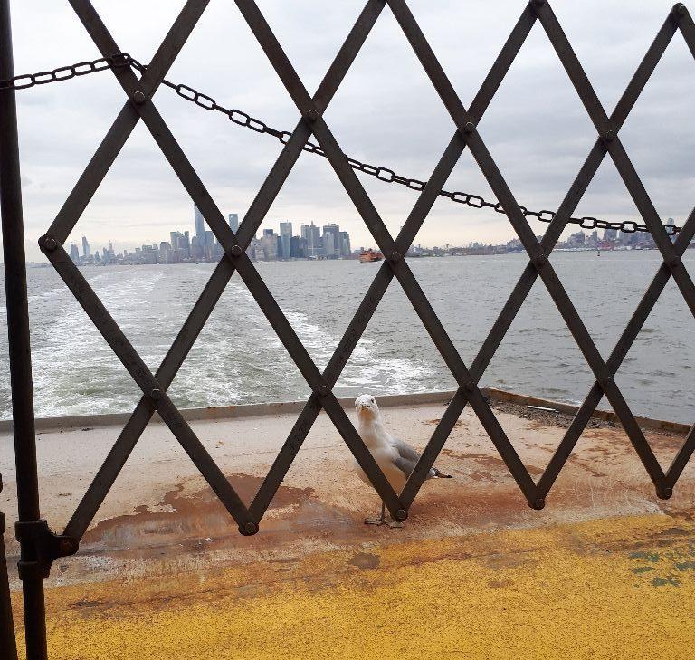 Möwe Auf Der Fähre Nach Staten Island