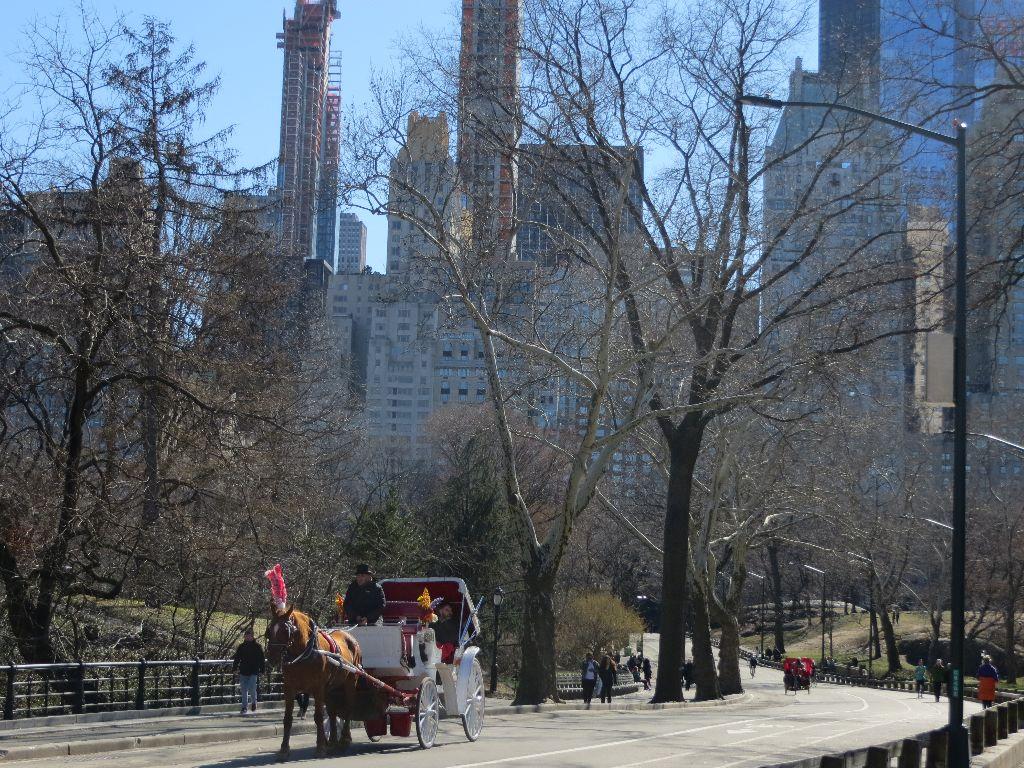 Pferdekutsche Im Central Park